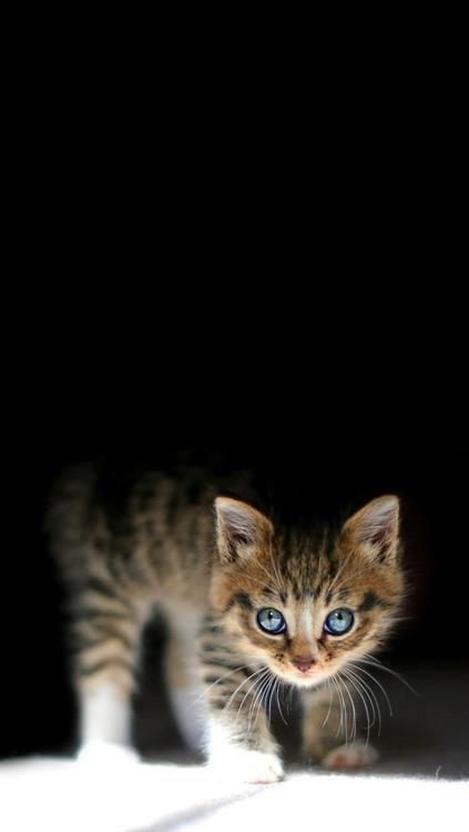 cat in dark blue eyes