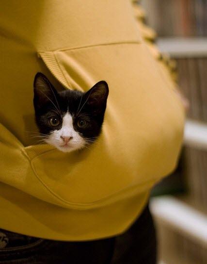 expecting cat