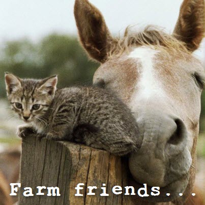 farm freinds
