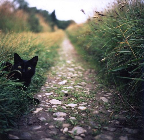 peek a kitty