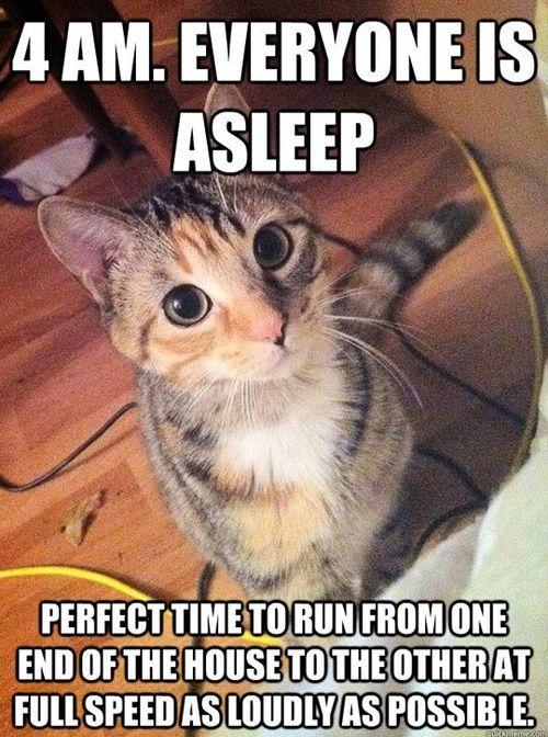 run around cat