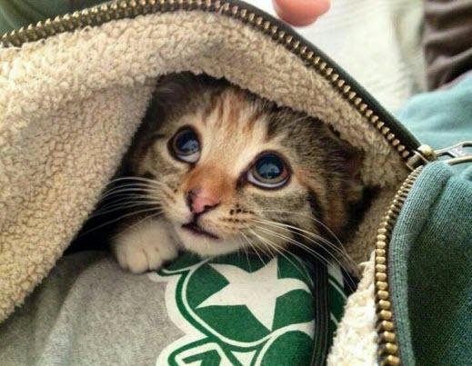 hiding kitty blanket