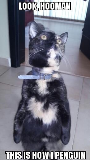 penguin cat again