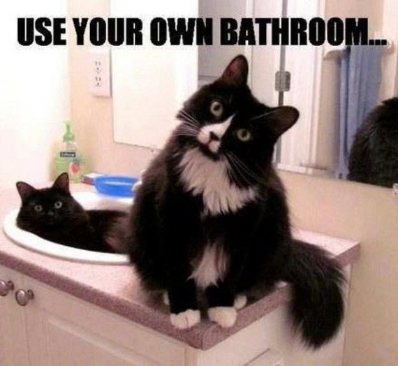 your bathroom cats