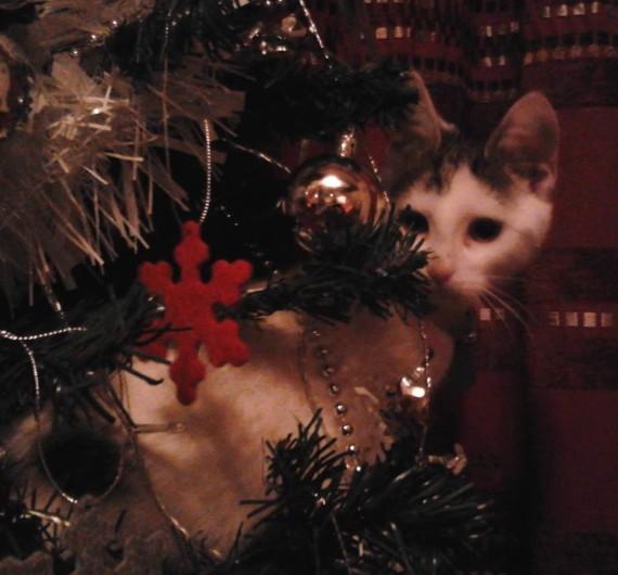 tinsel cat
