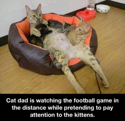 cat dad game