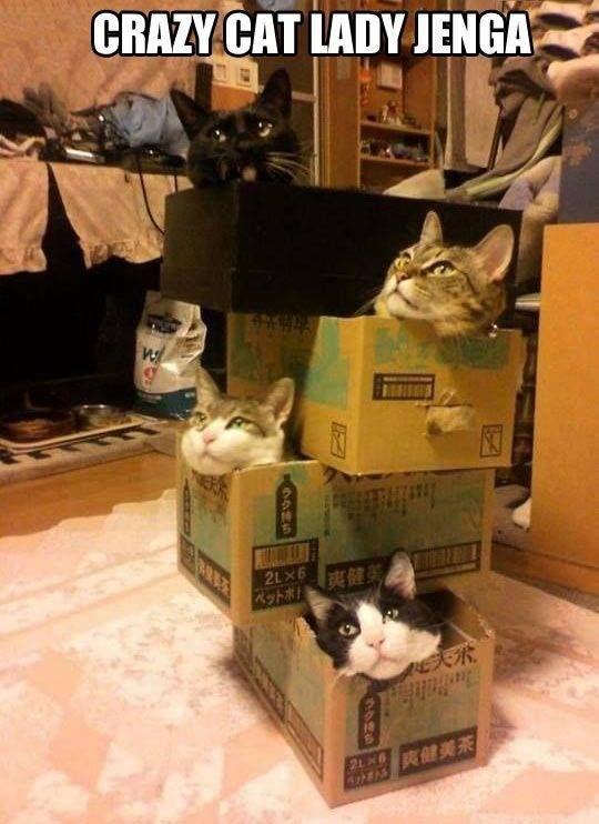 cat lady jenga
