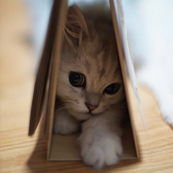 cat under book