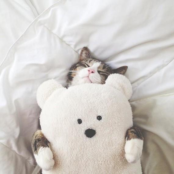 happy bear cuddle cat