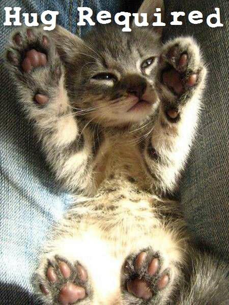 hug required kitten
