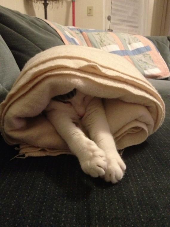 kitty wrap