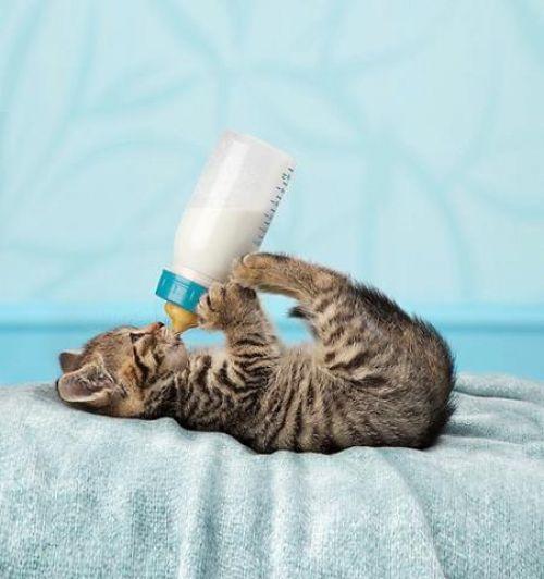 cat milk bottle up