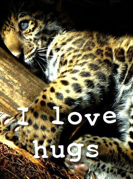 hug leopard