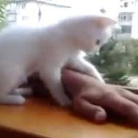 Overprotective Kitten!