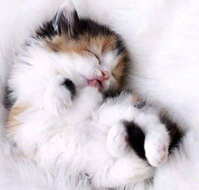 Awwwww, what a lovely fur baby.