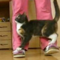 Suki the Cat's Agility Training