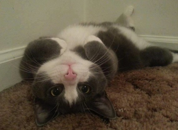 upsidedown belly rub