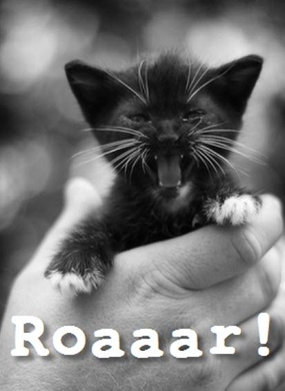black kitten roar