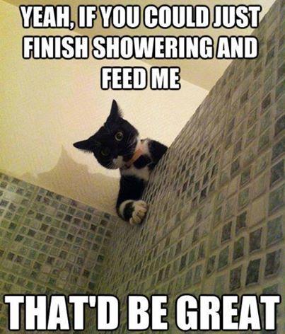 shower cat lol