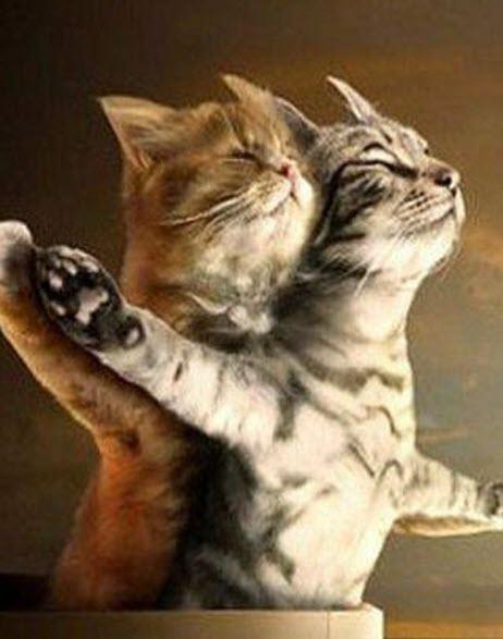titanic cats