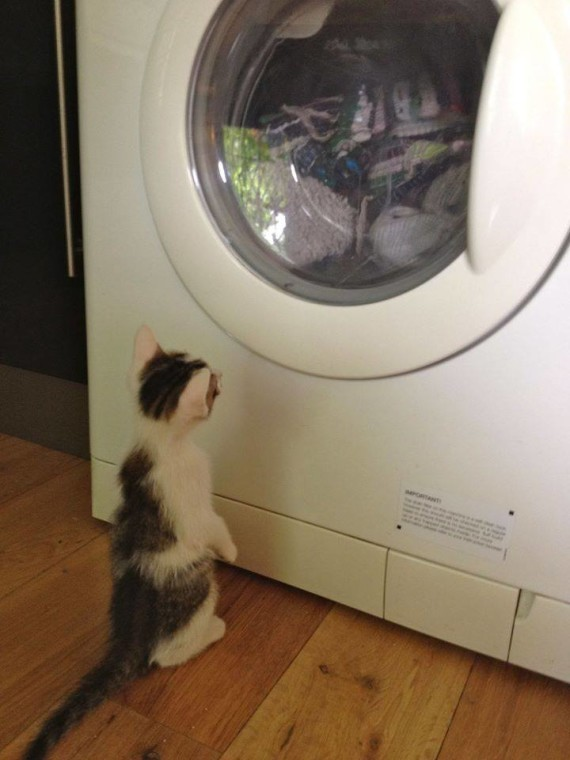 washing machine kitten