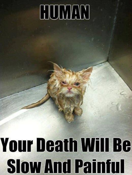 wet cat lol