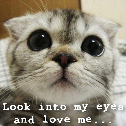 big cat eyes adorable