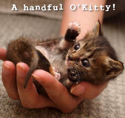 handful o kitty 2