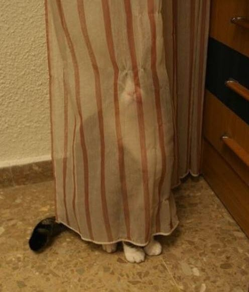 hide and seek 2
