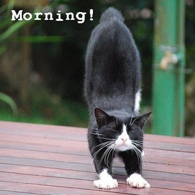 morning stretch cat