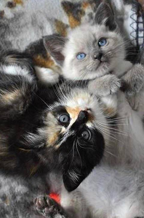 two kitties cuddling