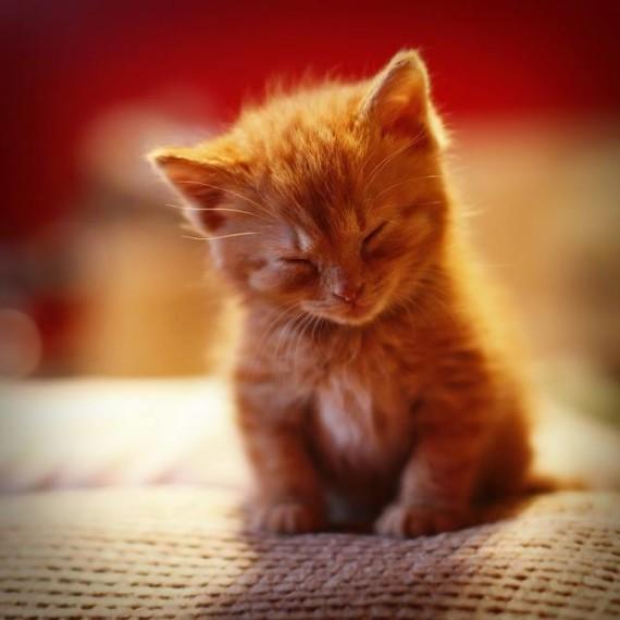 ginger asleep 1