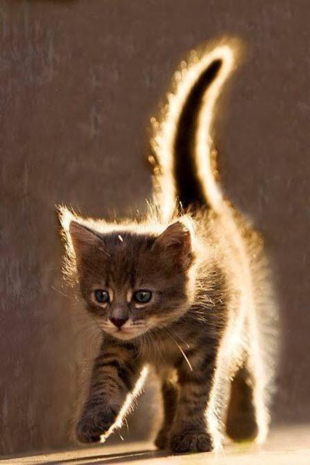 kitten with glow