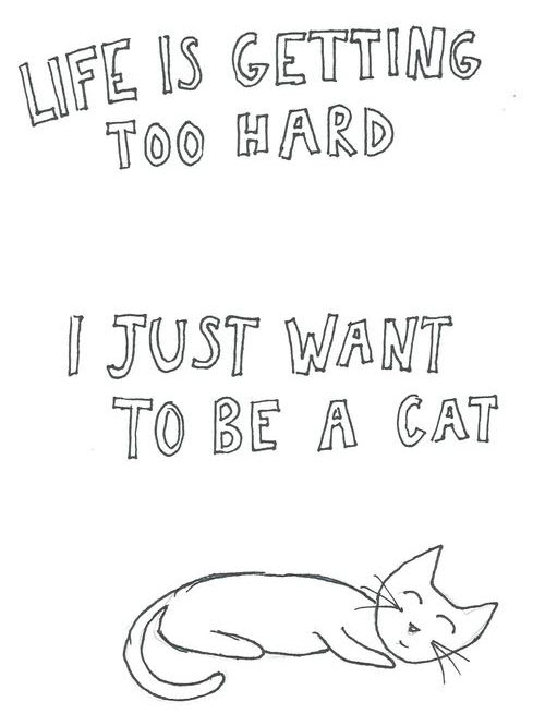 life too hard be a cat