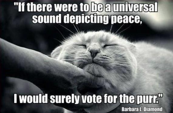 vote for purr