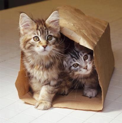 cats in a bag two