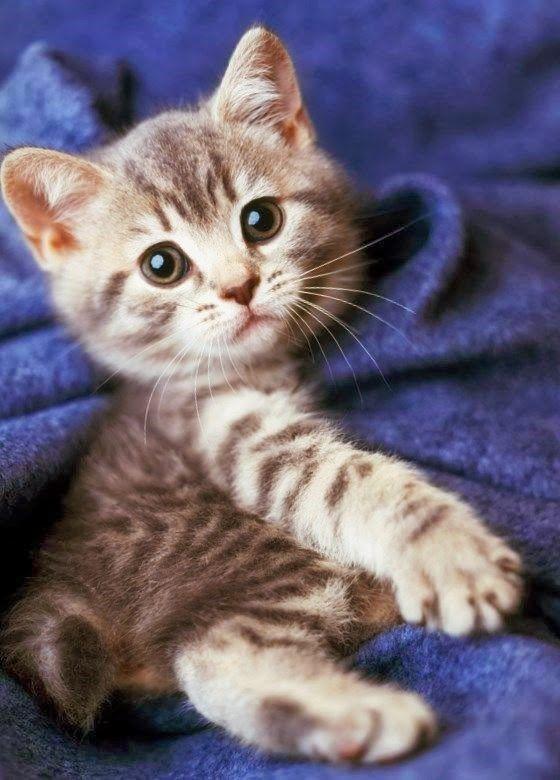 cute kitten today