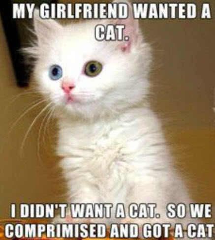 girlfriend wanted a cat