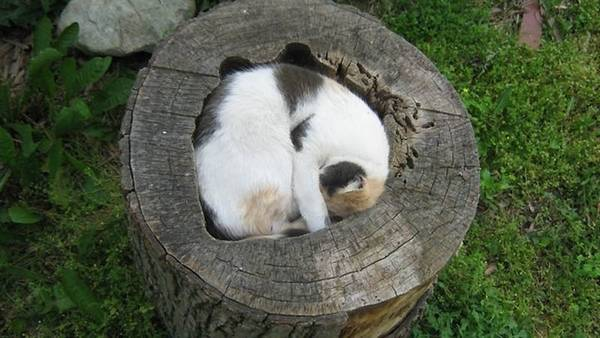 cat in tree stump