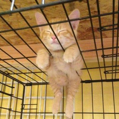 cat sleeps anywhere