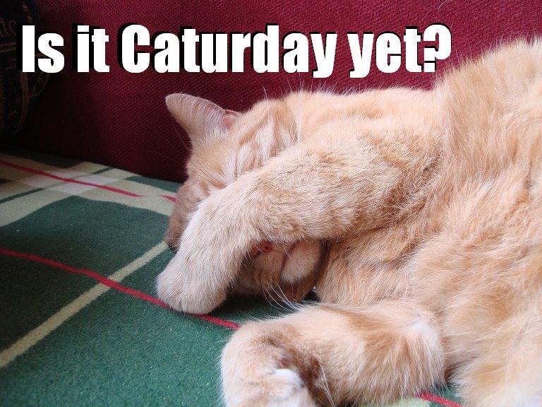 caturday yet lol