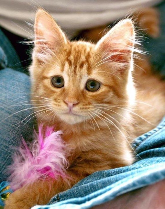 ginger with feather