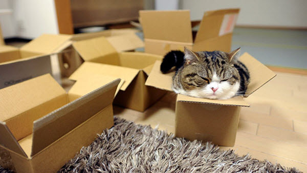 maru in small box