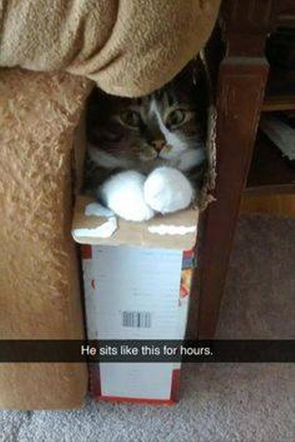 sit in box