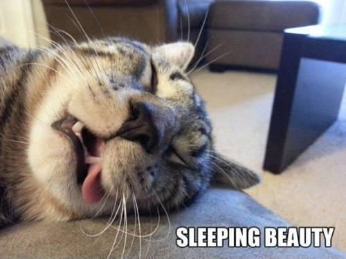 sleeping beauty lol