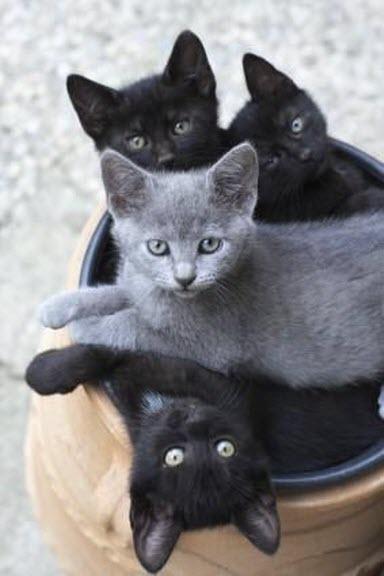 4 kittens in a pot