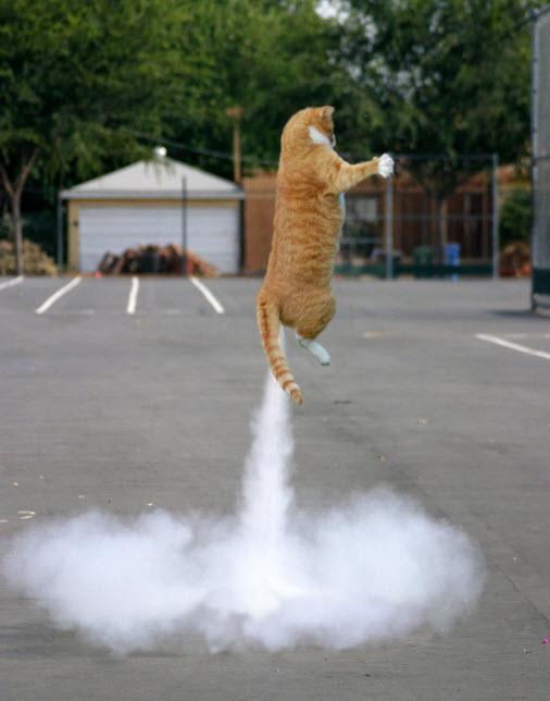 jet pack cat