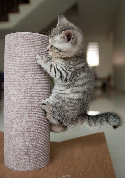 kitten on pole