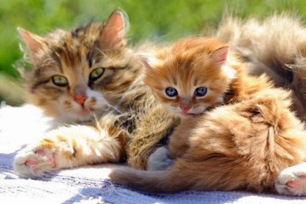 mum and ginger