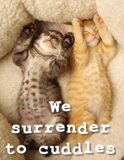 we surrender to cuddles